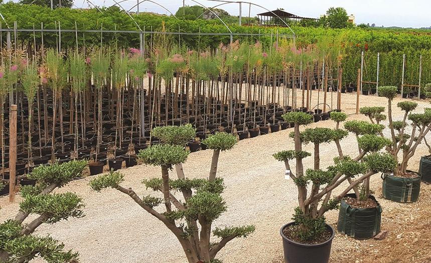 Bitki Satışı - Çimseren rulo çim hazır çim serme çim firması ege ve türkiye de sizlere en güzel peyzaj çözümleri sunmak için bitki satışı gerçekleştirmektedir.