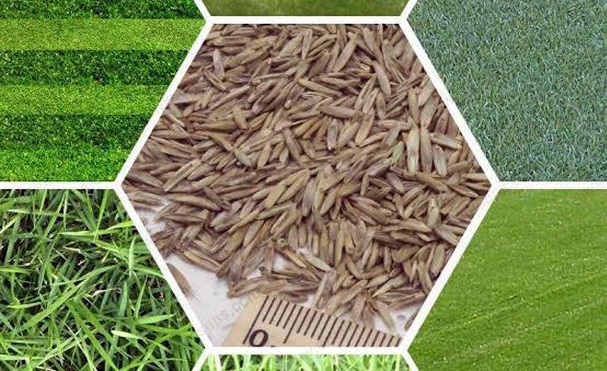 Çim tohumu - Çimseren serme çim rulo çim ve hazır çim firması sizlere istediğiniz her çeşit tohumu bulmanızda yardımcı olmaya hazırdır.
